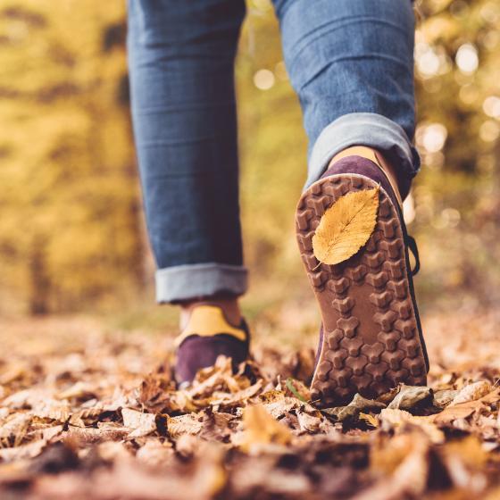 Promenad i höstlöv